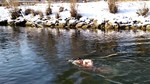 Why swim in a river at 0°C?